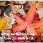 Der kleine Gartenphilosoph: Sprüche zum Nachdenken für den Oktober