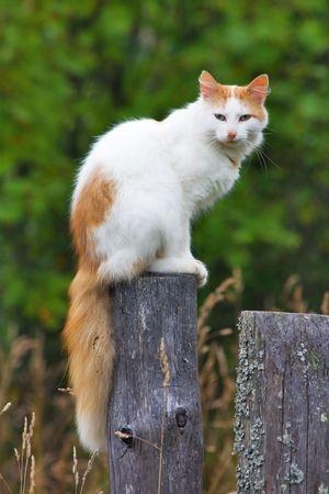 Katzen Vertreiben: Mit Diesen Mitteln Halten Sie Erfolgreich Fremde Katzen  Aus Ihrem Garten Fern