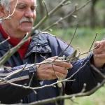 Butenas Gartenkalender – August. Tipps für Obst und Gemüse