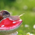 Schnexagon statt Schneckenkorn: Funktioniert so Schnecken bekämpfen in der Zukunft?