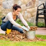 Butenas Gartenkalender im November: Harken, ernten, schützen.