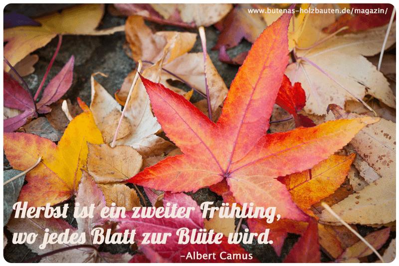 Herbst Ist Ein Zweiter Frühling Wo Jedes Blatt Zur Blüte Wird
