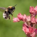 Schädlinge oder doch nützliche Helfer? Über welche fleißigen Gartenbesucher wir uns besonders freuen: