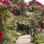Butenas Gartenkalender März: Die Saison beginnt!