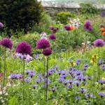 Gartengestaltung: Der natürliche Garten