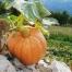 Kürbisse sind lecker und dekorativ. Sie wachsen gern auf Kompost. Foto: 123rf.com