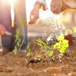 Im Garten richtig gießen – die besten Tipps