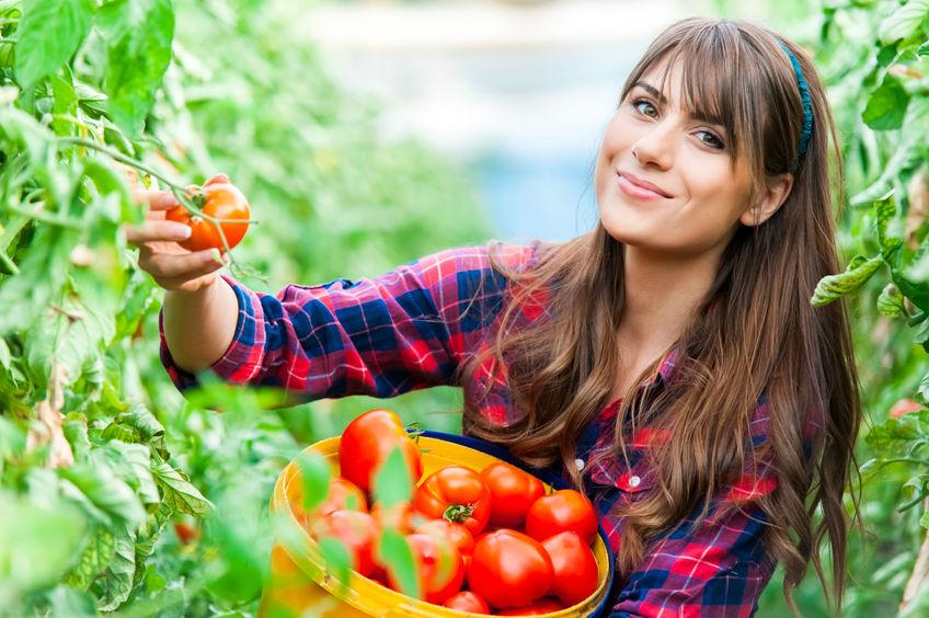 tomatenpflanzen tipps f r eine reiche ernte butenas holzbauten. Black Bedroom Furniture Sets. Home Design Ideas