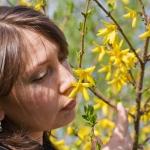 Der Garten im April – Butenas Gartenkalender