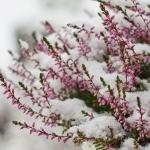 Ihr Gartenkalender für den Januar: Jetzt kommt es auf die Details an