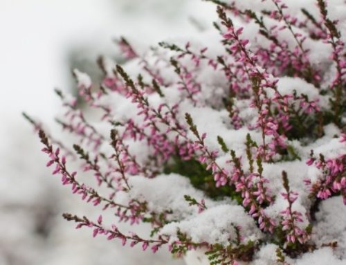 Winterfeste Gartenpflanzen