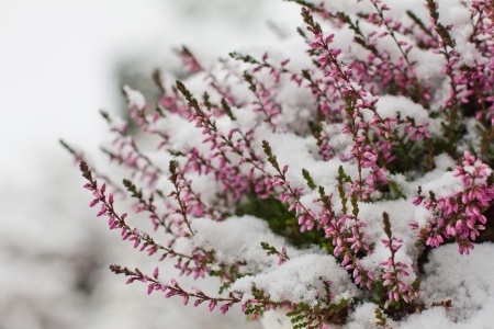 gartenpflanzen-winter