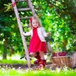 Butenas Gartenkalender: Der Garten im Juni