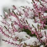 Hallo November – Was steht jetzt noch im Garten an?